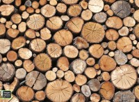 Images in Nature – Logs