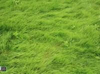 Images in Nature – Grass