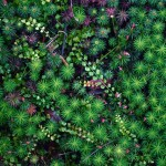 Images in Nature – Forest Floor 1