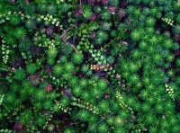 Images in Nature – Forest Floor