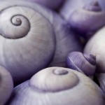 Images in Nature – Shells 1