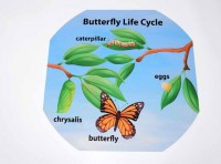 Butterfly Lifecycle Outdoor Mat