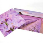 Lavender Wall Backdrop 1