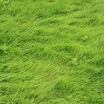 Images in Nature – Grass 1