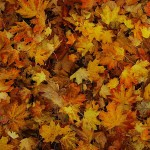 Images in Nature – Leaves 1