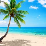 Palm Tree Playmat 1