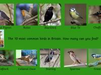 Wall Panel Birds