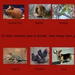 Wall Panel Pets 1