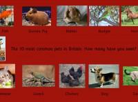 Wall Panel Pets