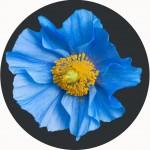 Blue Flower Playmat 1
