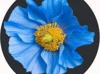 Blue Flower Playmat