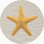 Starfish Shell Playmat 1