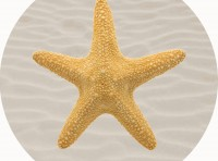 Starfish Shell Playmat