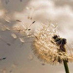 Images in Nature – Windy Day 1