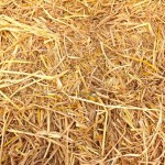 Images in Nature – Straw 1