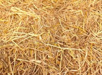 Images in Nature – Straw