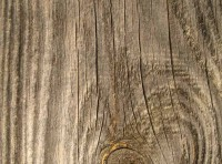 Images in Nature – Wood Grain