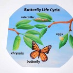 Butterfly Lifecycle Outdoor Mat 2
